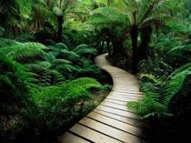 camino-en-el-bosque2