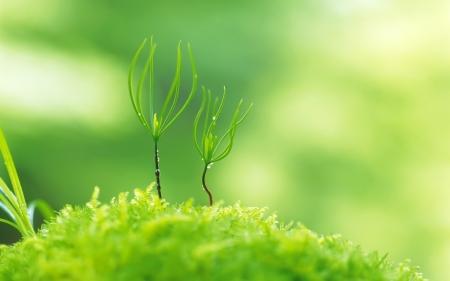 brotes-verdes