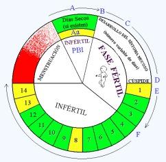 Diagrama circular Billings fertilidad