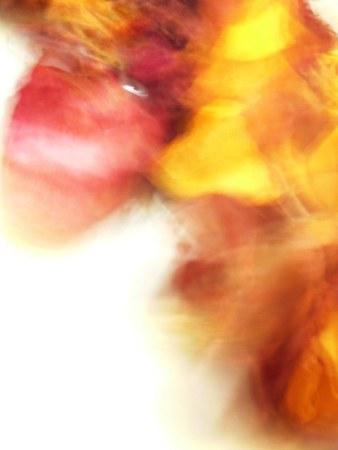Caballo - Beatriz Depares