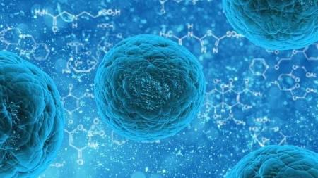 células madre - reconestruir piel