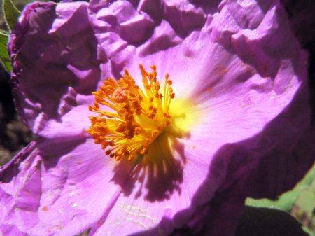 Beatriz Depares_ flor violeta