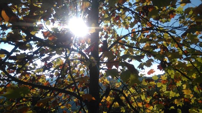 Arbol y sol