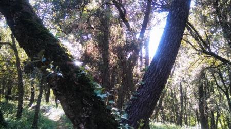 dos arboles B. DEPARES