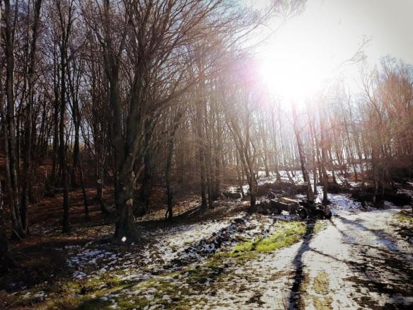 Bosque leñador - B. Depares